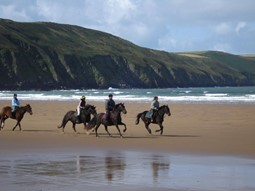 Things To Do in Devon Guide