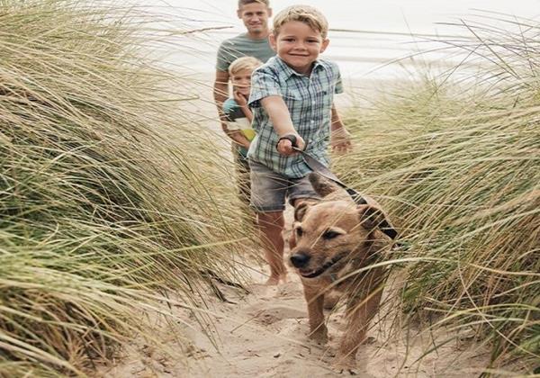 Dog Friendly Walking In Dunes